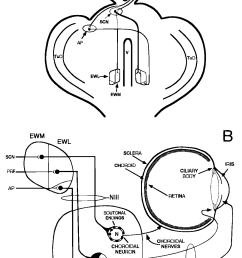 schematic line drawings illustrating the circuit under study in the present investigation [ 1048 x 1616 Pixel ]