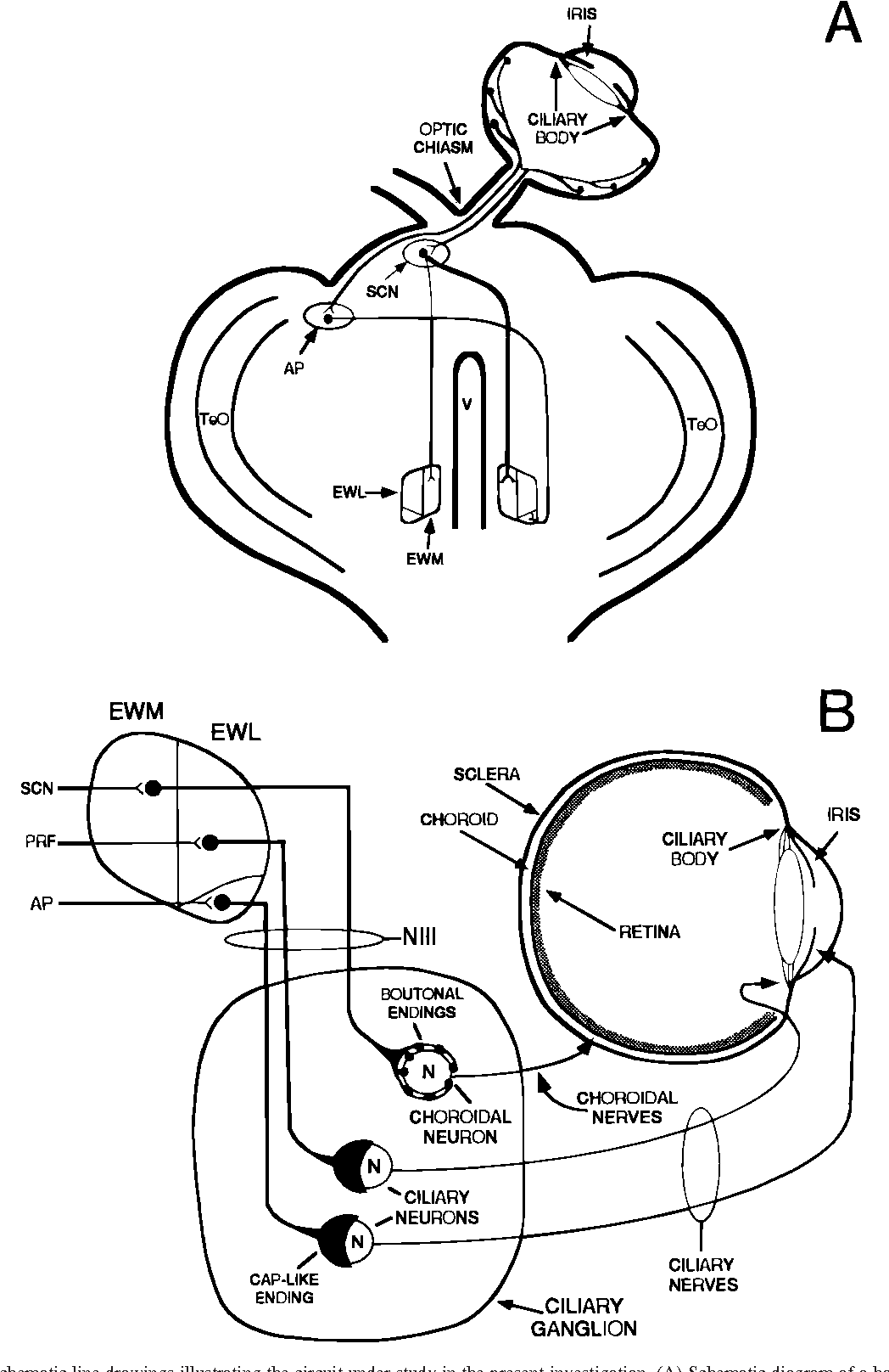 hight resolution of schematic line drawings illustrating the circuit under study in the present investigation