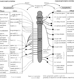 autonomic nervous system reprinted with permission from neal mj medical pharmacology [ 1200 x 1064 Pixel ]