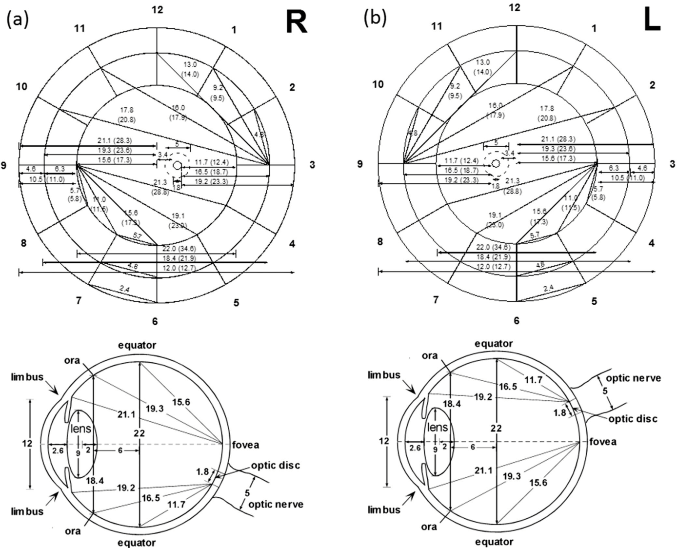hight resolution of retinal fundus diagram upper and transverse cross section diagram