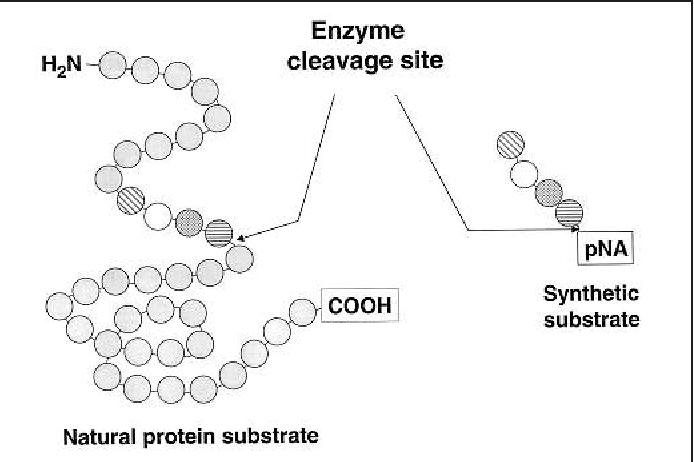 Figure 1 from Chromogenic methods in coagulation