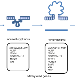 1 aberrantly methylated genes in the polyp crc sequence schematic diagram of [ 1180 x 668 Pixel ]