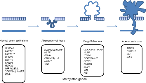 small resolution of 1 aberrantly methylated genes in the polyp crc sequence schematic diagram of