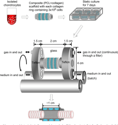 a schematic diagram of the experimental design isolated cells were seeded [ 1034 x 1086 Pixel ]