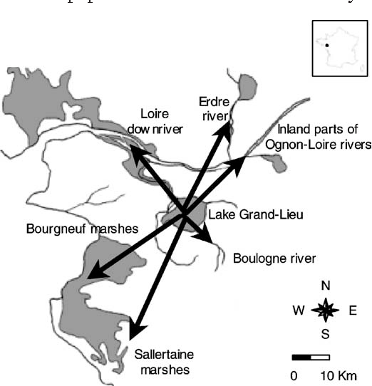 Figure 1 from Space utilization by a cormorant