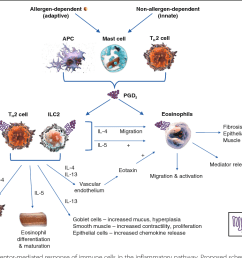 fig 1 overview of the dp2 receptor mediated response of immune cells in the [ 1008 x 808 Pixel ]