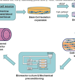 schematic diagram showing stem cell based approach in vascular tissue engineering [ 1368 x 926 Pixel ]