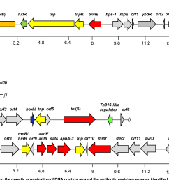 diagram showing the genetic organization of dna contigs around the antibiotic resistance genes [ 1392 x 1006 Pixel ]
