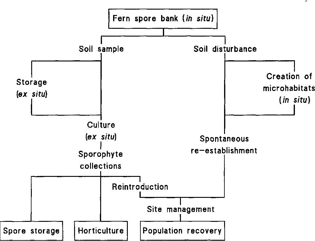 hight resolution of natural soil spore banks can they be used to retrieve lost ferns semantic scholar
