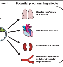 1 diagram representing the importance of environmental factors either in vivo or in [ 1294 x 642 Pixel ]