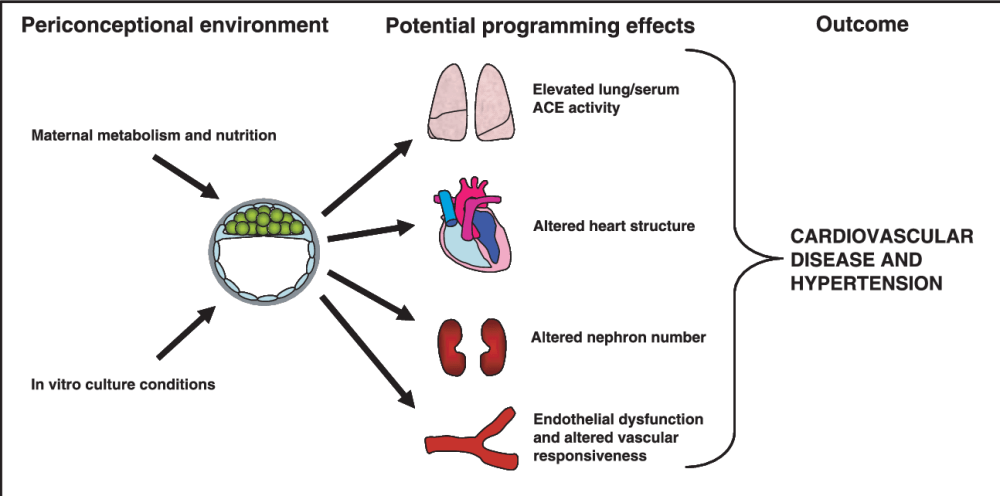 medium resolution of 1 diagram representing the importance of environmental factors either in vivo or in