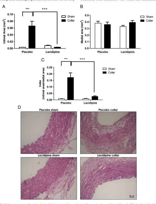 small resolution of effects of lacidipine treatment on collar induced intimal thickening in rabbit