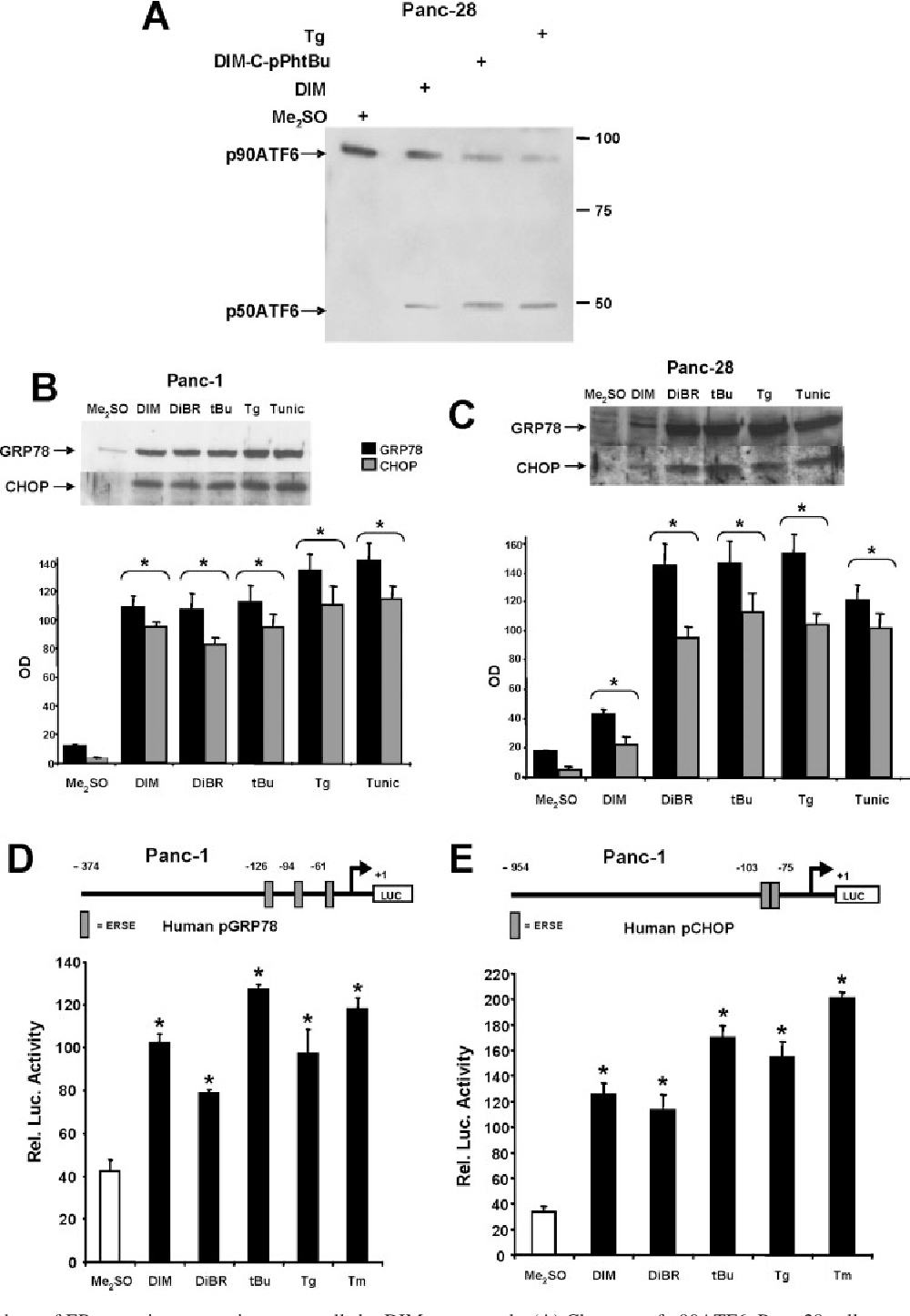 hight resolution of activation of markers of er stress in pancreatic cancer cells by dim