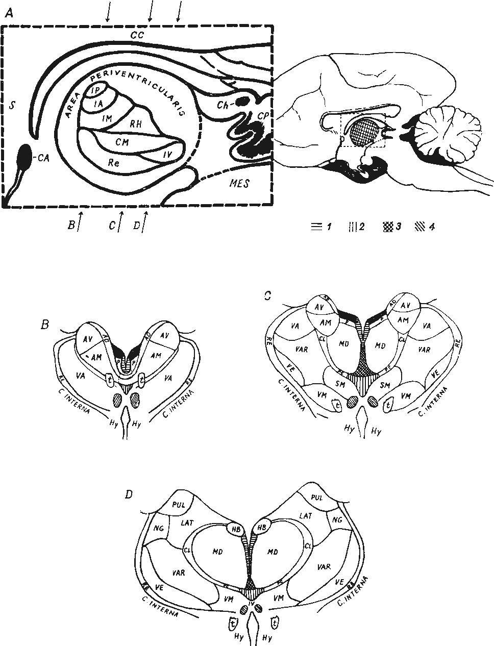 hight resolution of diagram of the topographical relations of the mid line thalamic