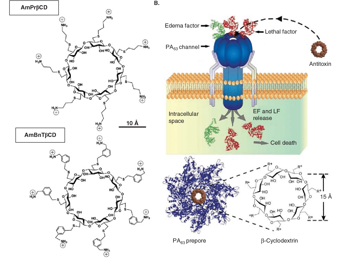 hight resolution of schematic representation of blocking anthrax on a single channel level a