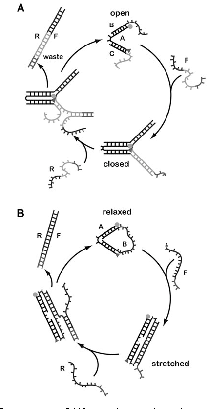 Figure 12 from Nucleic acid based molecular devices