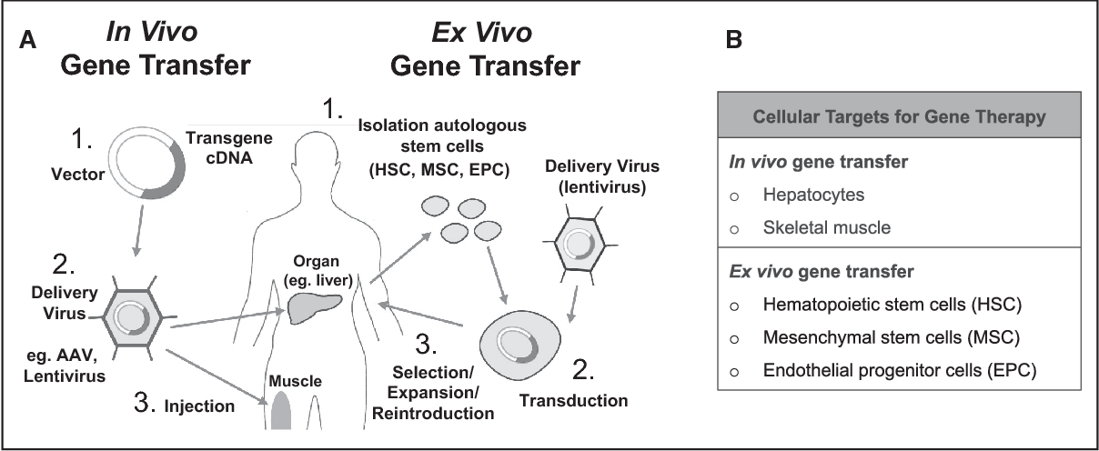 in vivo gene therapy diagram audi a4 engine parts figure 2 from for coagulation disorders semantic scholar methods transfer of factor genes a currently used strategies