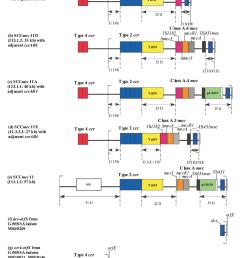 schematic diagram showing the genetic organization of the novel sccmec iid  [ 1066 x 1356 Pixel ]
