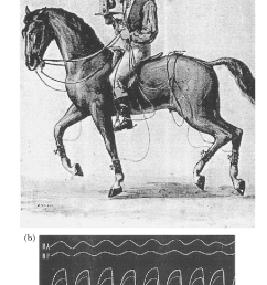 a horse equipped with pneumatic accelerometers attached to the limbs [ 852 x 1228 Pixel ]