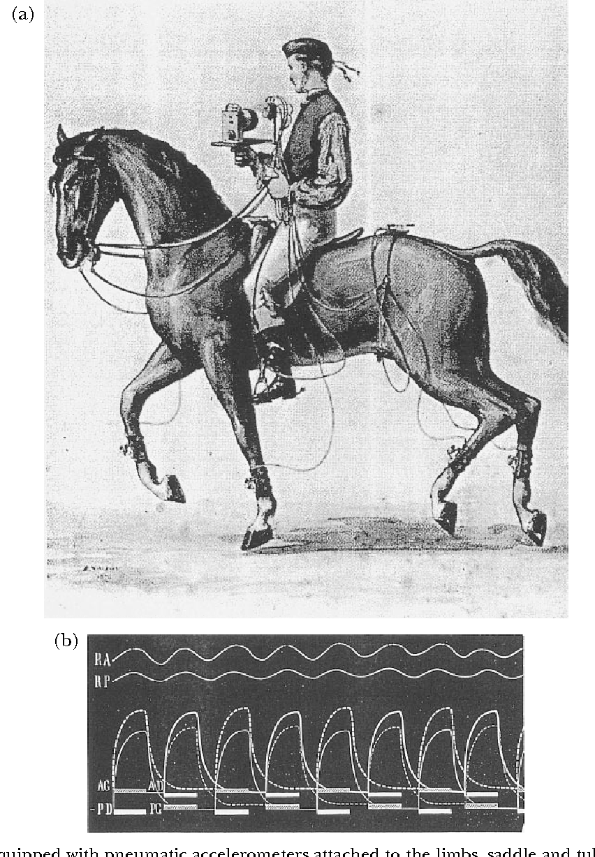 hight resolution of  a horse equipped with pneumatic accelerometers attached to the limbs