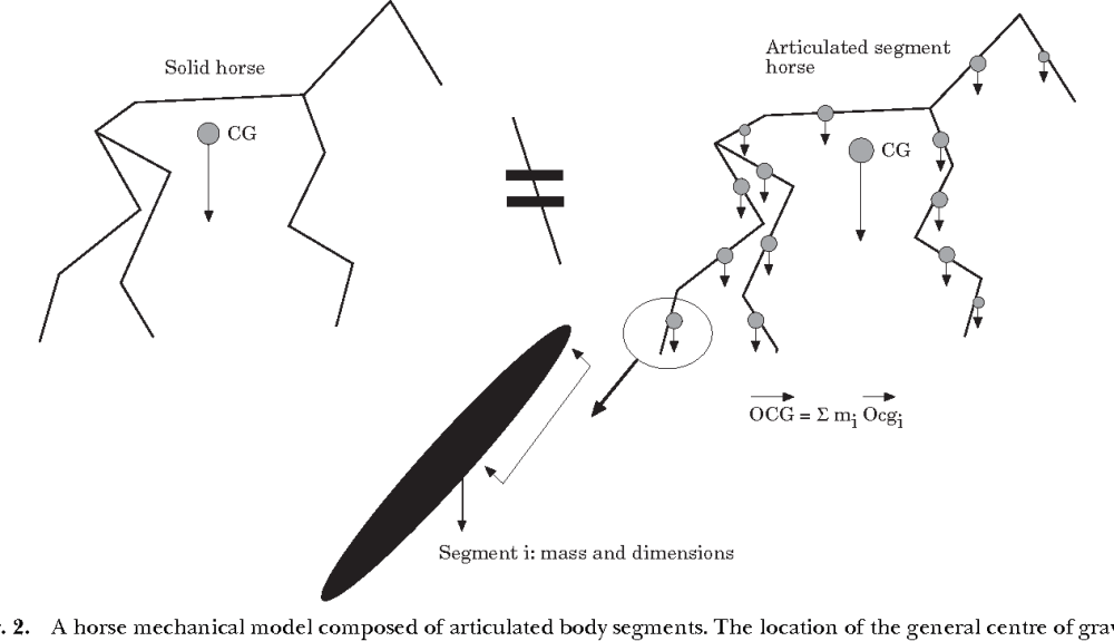 medium resolution of a horse mechanical model composed of articulated body segments the location