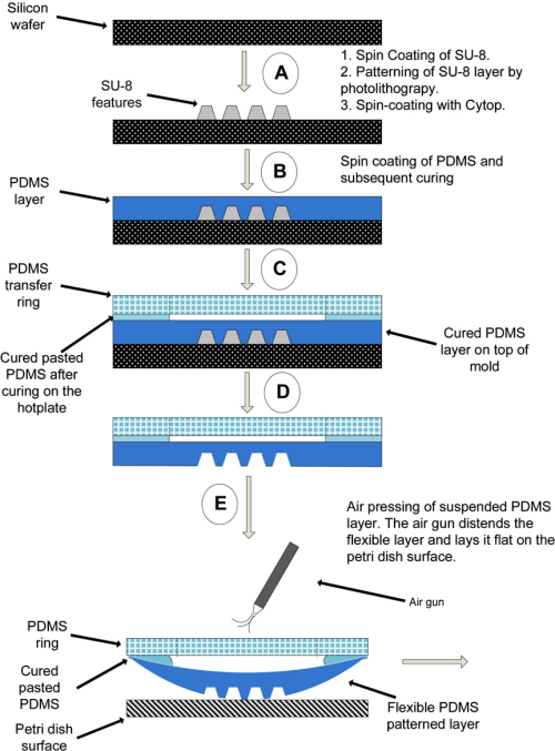 small resolution of a schematic diagram of the phantom fabrication showing the pdms softlithography steps