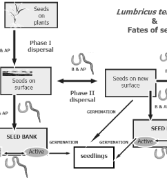 conceptual framework of the movements and fates of seeds seeds can [ 1222 x 774 Pixel ]