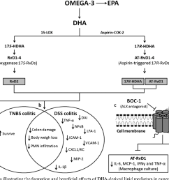 schematic diagram illustrating the formation and beneficial effects of dha derived lipid [ 1264 x 848 Pixel ]