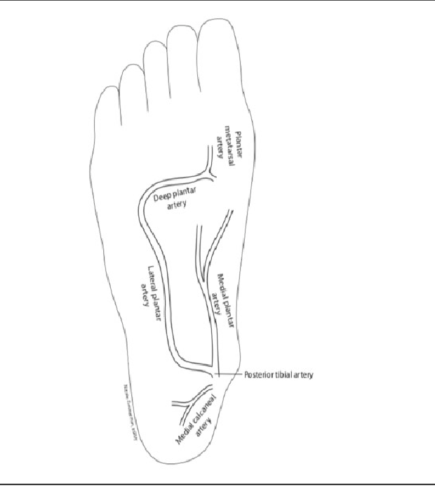 Figure 1 from Innovative Arterial Duplex Examination: A