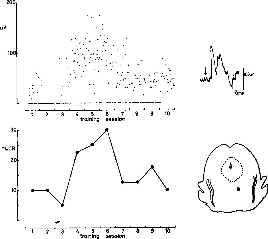reticular formation diagram 1980 honda cb750 wiring figure 2 from evoked potentials in the during auditory conditioning of corneal reflex chronic decerebrate rat