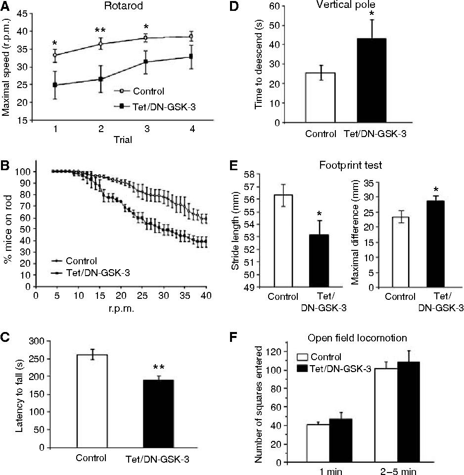 hight resolution of figure 4 tet dn gsk 3 mice show impaired motor coordination motor