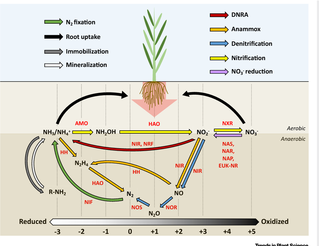 hight resolution of the soil nitrogen cycle a schematic overview of the major n transformations