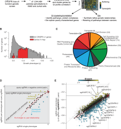 a large scale quantitative gi mapping platform in human cells [ 1158 x 1408 Pixel ]