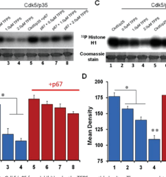 figure 4 p67 specifically protects cdk5 p35 from inhibition by the tfp5 peptide in [ 1178 x 788 Pixel ]