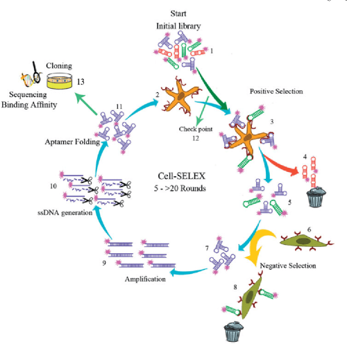 small resolution of schematic diagram of cell selex process at least 5 to more