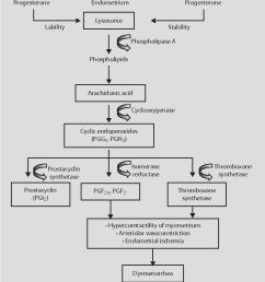 pathophysiology of dysmenorrhea according to dawood 29 30  [ 854 x 978 Pixel ]