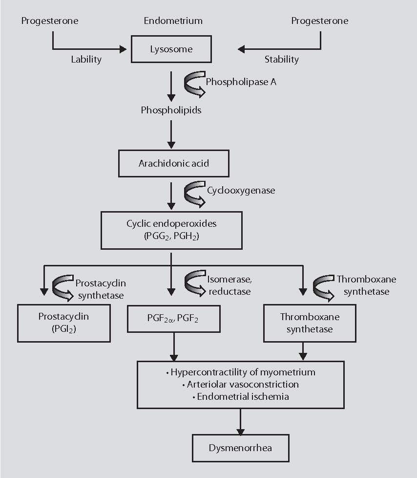 medium resolution of pathophysiology of dysmenorrhea according to dawood 29 30