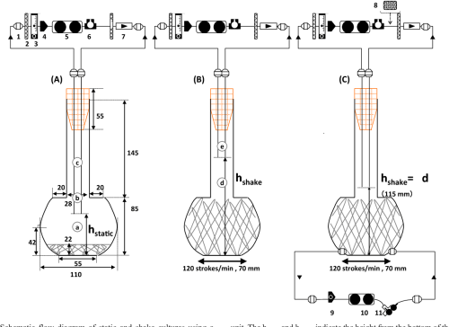 small resolution of 1 schematic flow diagram of static and shake cultures using a sakaguchi flask with