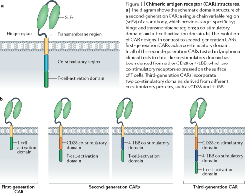 small resolution of figure 1 chimeric antigen receptor car structures a the diagram shows