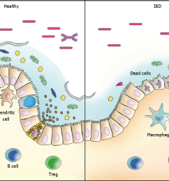 figure 1 schematic model of host microbiota interactions in the intestine the interaction between [ 1244 x 774 Pixel ]