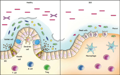 small resolution of figure 1 schematic model of host microbiota interactions in the intestine the interaction between