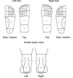 figure 2 the areas used for scoring of the foot pain manikin  [ 856 x 958 Pixel ]