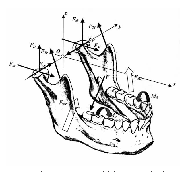 human mandible diagram trailer 7 pin wiring figure 1 from three dimensional model of the as a fmr is resultant