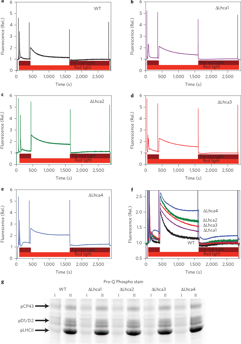hight resolution of figure 1 state transitions and thylakoid protein phosphorylation in wild type and lhca plants