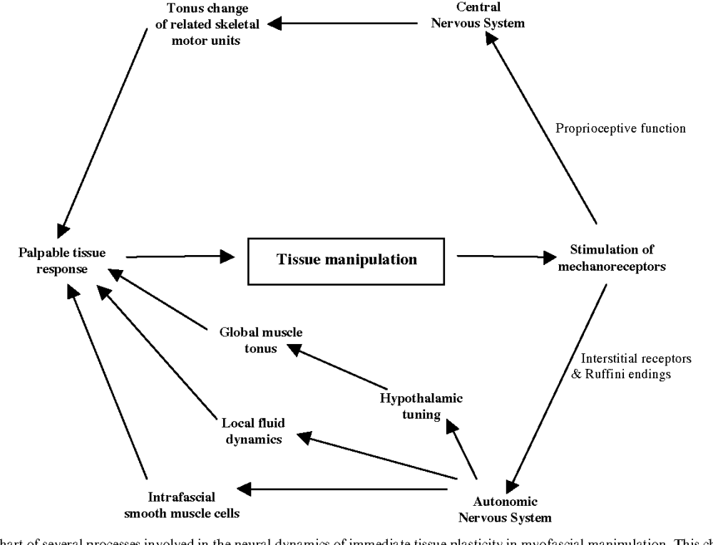 medium resolution of 6 flow chart of several processes involved in the neural dynamics of immediate tissue