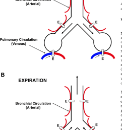 schematic illustrating the exchange of gases with both the pulmonary circulation in [ 742 x 1272 Pixel ]