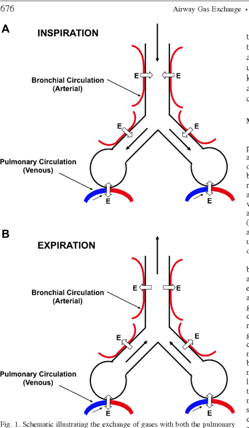 small resolution of schematic illustrating the exchange of gases with both the pulmonary circulation in