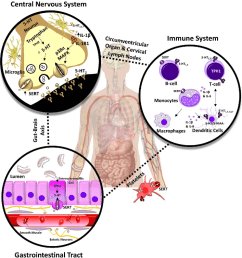 figure 1 serotonin 5 ht controls various cns immune system and [ 938 x 992 Pixel ]
