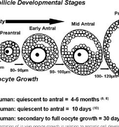 a diagram of ovarian follicle [ 1128 x 726 Pixel ]