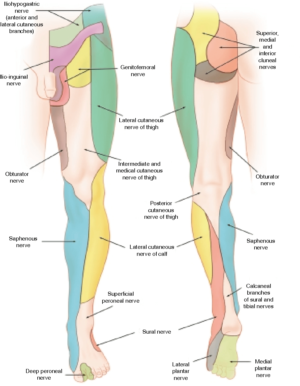 lower leg nerve diagram gear ratio entrapments of the ankle and foot in sport semantic scholar